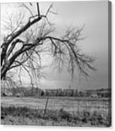 Old Winter Tree Grayscale Canvas Print