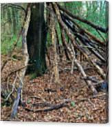 Old Woodland Hide. Canvas Print