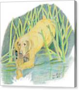 Old Yeller Canvas Print
