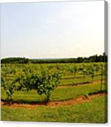 Old York Winery Canvas Print