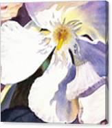 Oleander Close Up  Canvas Print
