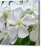 Oleander Ed Barr 3 Canvas Print