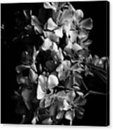 Oleander Flowers In Black And White 2 Canvas Print