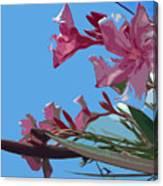 Oleander Flowers Wilting In The Brutal Florida Sun    Canvas Print