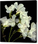 Oleander Canvas Print
