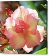 Oleander Mrs. Roeding 1 Canvas Print