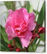 Oleander Splendens Giganteum 1 Canvas Print