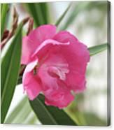 Oleander Splendens Giganteum 3 Canvas Print