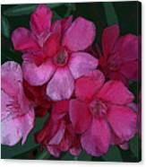 Oleanders In Pink Canvas Print