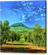 Olive Grove Spain Canvas Print