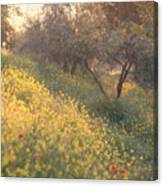 Olive Grovetuscany Canvas Print