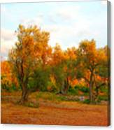 Olive Tree Forest Canvas Print