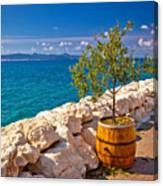 Olive Tree In Barrel By The Sea Canvas Print