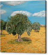 Olive Trees In Summer Canvas Print
