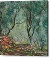 Olive Trees In The Moreno Garden Canvas Print