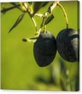 Olives #1 Canvas Print