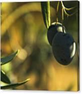 Olives #2 Canvas Print