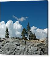 Olmsted Point Pine Rear View Canvas Print