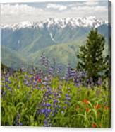 Olympic Mountain Wildflowers Canvas Print