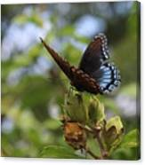 On Blue Wings Canvas Print