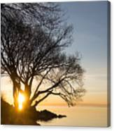 On Fire - Bright Sunrise Through The Willows Canvas Print