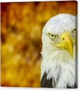 On Fire The American Bald Eagle Canvas Print