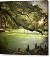 On Swamp's Edge Canvas Print