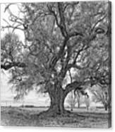 On The Delta Monochrome Canvas Print
