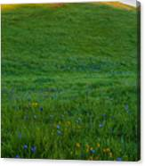 On The Hilltop Canvas Print
