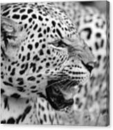 On The Hunt Bw Canvas Print
