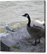 On The Lakefront Canvas Print