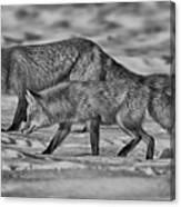 On The Prowl Bw Canvas Print