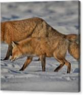 On The Prowl Hdr Canvas Print
