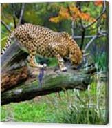 On The Prowl Canvas Print