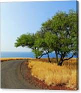 On The Road To Lapakahi Canvas Print