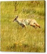 On The Run ... Montana Art Photo Canvas Print