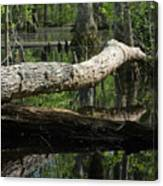 On The Swamp Canvas Print