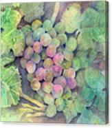 On The Vine Canvas Print
