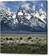 On To Greener Pastures Canvas Print