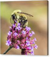 On Top Of The World - Bee Style Canvas Print