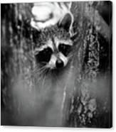On Watch - Bw Canvas Print