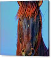 Onaqui Wild Stallion Portrait Canvas Print