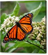 Once Upon A Butterfly 001 Canvas Print