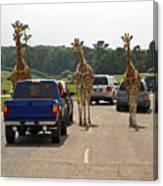 Oncoming Traffic Canvas Print