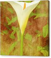One Arum Lily Canvas Print