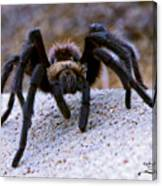 One Big Hairy Spider Canvas Print