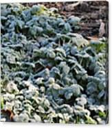 One Frosty Morning Canvas Print