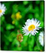 One Little Wildflower Canvas Print