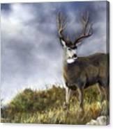 One Lonely Mule Deer Canvas Print
