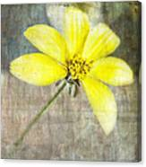 One Must Have Sunshine Freedom And A Little Flower Canvas Print